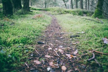 My Forest Exploration
